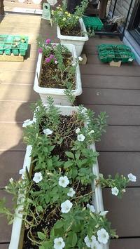 花ボランティア - ウィズ(ゼロ)コロナのうちの庭の備忘録~Green's Garden~