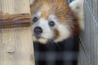 鯖江市西山動物園の旅行記を姉妹ブログ「レッサーパンダ紀行」にアップしました - (続)レッサーパンダ紀行