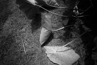 plante 8 - digital camera monochrome Photograhy