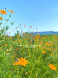 * 風に揺れる花 - Kaara's Eye