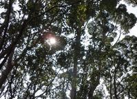 日陰を探して Walking in the Sunshine - 大屋地爵士のJAZZYな生活