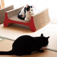 外猫とうちの子の関係 - 猫と夕焼け