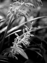 白いフォルム - 節操のない写真館