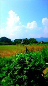ねんきんQuiz-第621問(年金制度) - 松浦貴広のねんきんブログ