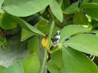 グラフィック姫路取材 - 手柄山温室植物園ブログ 『山の上から花だより』