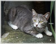かえる寺の子猫ちゃん - おだやかに たのしく Que Sera Sera