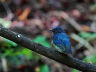 8月2度目の峠の水場OBI - シエロの野鳥観察記録