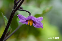 「菜園花」 - 藍の郷