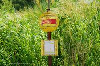 飯山市柄山地区にて - 野沢温泉とその周辺いろいろ2
