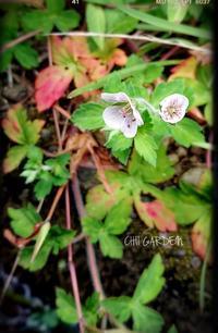 小さなお花み~っけ♬︎ - どんぐりの木の下で……