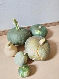 野菜の収穫 - slow着物のブログ