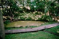 自宅から150mにある原生林の中の池 - 照片画廊