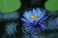 Blue - 光りの音   photo gallery