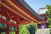 夏の鎌倉散歩・鶴岡八幡宮 - エーデルワイスPhoto