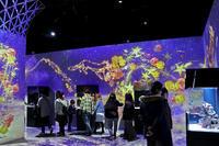 アクアパーク品川「星空のクリスマス」:Sky Over City①~カラッパたちの夜 - 続々・動物園ありマス。