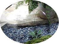 8月の坪庭 - 昭和の家+庭とお片付け