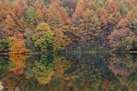 秋の彩 - Today's action