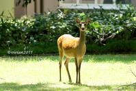 奥日光探鳥会~日光湯元温泉近辺は野鳥がいっぱい~ - 日々の贈り物(私の宇都宮生活)