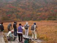 思い出の撮影行栂池高原の紅葉前半 - 日本あちこち撮り歩記