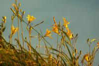 夕方に咲く花g - 雲空海