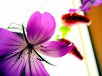 5月のトイレに花を飾る - 綺麗な部屋のママでいたい