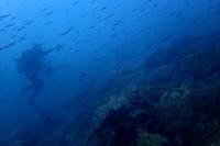 20.8.28台風(次の接近)を気にしながら - 沖縄本島 島んちゅガイドの『ダイビング日誌』