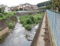 前川(1)北川合流点~弁天橋 - ひのきよ