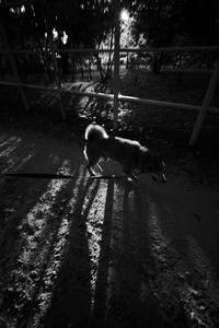 朝から晩、いや深夜まで暑いな。20200826 - Yoshi-A の写真の楽しみ