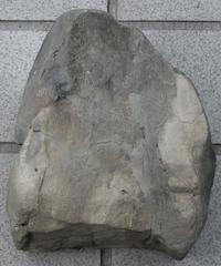 after 20年北のプー生活(13)…化石編(3) - ふぉっしるもしてみむとてするなり