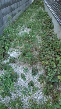 裏庭草取り - ウィズコロナのうちの庭の備忘録~Green's Garden~