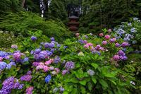 岩船寺の紫陽花たち - 花景色-K.W.C. PhotoBlog