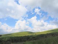 車山から八島湿原 花散歩2020.8.25(火) - 心のまま、足の向くまま・・・