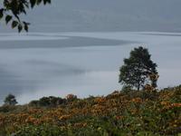 野反湖再訪(4) ~マルバダケブキの大群落と~ (2020/8/21撮影) - toshiさんのお気楽ブログ