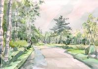 雨上がりの白樺林 - ryuuの手習い