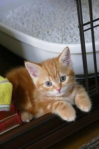 はじめましてミラです。ミラの最初の話題はウンチとおしっこです - 猫とオヤジの静かなる日々