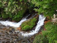 『阿弥陀ヶ滝(あみだがたき)へ・・・・・』 - 自然風の自然風だより