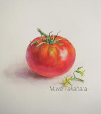 A tomato - miwa-watercolor-garden