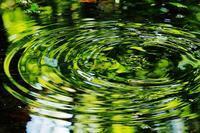 ザワつく水鏡・・・赤城自然園・みずすましの池 - 『私のデジタル写真眼』