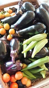 買うと高い夏野菜 - 十色記