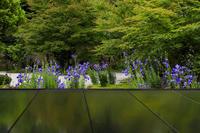 廬山寺・桔梗咲く - 花景色-K.W.C. PhotoBlog
