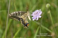 榛名山の花と蝶 - 風の彩りー3