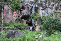 幻の滝 - 動物園へ行こう