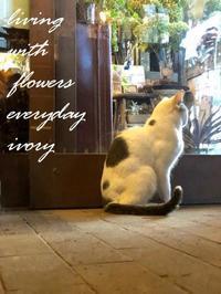 本日は定休日です。 -  Flower and cafe 花空間 ivory (アイボリー)