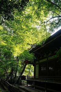緑の深大寺 - 柳に雪折れなし!Ⅱ