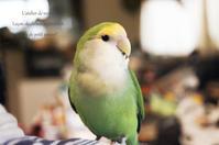 小鳥と暮らす Vol,3 - *Romantic caramel-香草菓子や粉と卵とおうちおやつ*