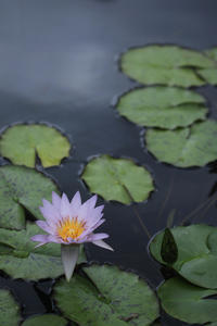 今日の空中庭園@西武屋上 - meの写真はザンス