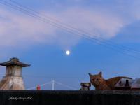 月と猫 - Berry's Bird