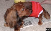 今日は愛犬「茶々」の10回目の命日 - いつとこ気まぐれブログ