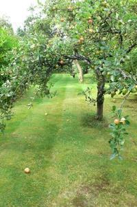 ガーデンのリンゴの木 - どんぐりの秘密のガーデン