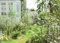 Garden Storyさんにて「実録!バラがメインの庭づくり第8話」がアップされました! - バラとハーブのある暮らし Salon de Roses